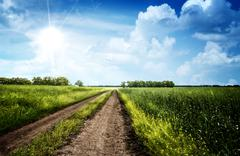 Summer day on the meadow, rural landscape Stock Photos