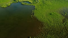 Aerial view of rich flora and fauna, Southern Florida Stock Footage