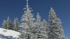 Snow all over the Fir Trees and Ground Landscape in Winter Amazing Frozen Scenic Stock Footage