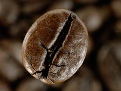 coffee bean in deep shadows over unfocused grains background - stock photo