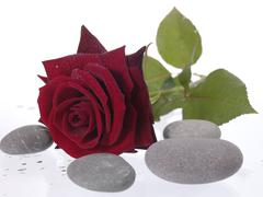 rred rose on the wet background with water droplets - stock photo