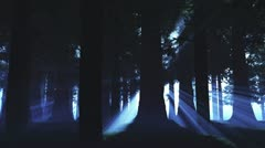 Supernatural Forest Lightrays 1 720 Stock Footage
