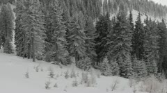 Winter over the Pine Woods Forest Snow-Covered Fir Trees in Foggy Day Dramatic Stock Footage