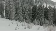 Stock Video Footage of Winter over the Pine Woods Forest Snow-Covered Fir Trees in Foggy Day Dramatic