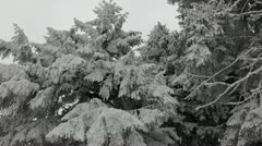 Snowed Fir Trees Dark Sky Mystic Foggy Clouds Magic Place Vague Obscure View Day Stock Footage