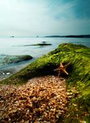 Summer time on the sea. starfish over sand close to rock Stock Photos