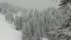Snowed Fir Trees Dark Cloudy Sky Mystic Forest Winter Landscape Mist Fog Day Stock Footage