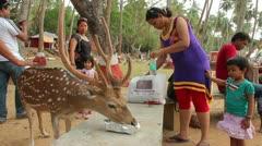Cervus nippon (Sika deer) Stock Footage