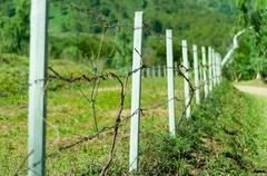 old barb wire fence with grass in field - stock photo