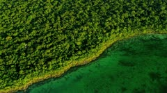 Aerial view of rich Sub tropical flora, Southern Florida Stock Footage