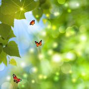 abstract summer backgrounds with sun beam and butterfly - stock illustration