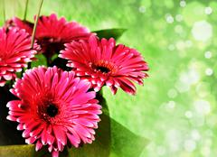 pink gerber flowers over abstract green backgrounds with bokeh - stock illustration