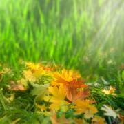 Softness. autumnal abstract natural backgrounds Stock Photos