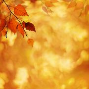 Abstract autumnal backgrounds with petzval lens bokeh Stock Illustration