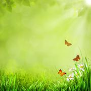 Stock Photo of summer natural backgrounds with beauty butterfly for your design