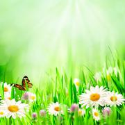 Beautiful spring backgrounds with chamomile flowers Stock Photos