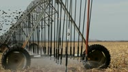 Time Lapse Birds Fly Through Pivot Irrigation System Stock Footage