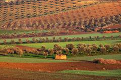 fields in morocco - stock photo
