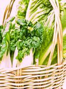 Closeup of fresh  baby bok choy ans  cos salad in ratten basket as  backgroun Stock Photos