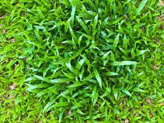 Meadow texture as  background Stock Photos