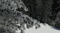 Winter Scenery Fir Woods Landscape in the Mountains Alpine European Destination Stock Footage