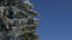 Snowed Trees Branches Winter Scenery Weather Mountains Nature Pine Woods Forest - stock footage