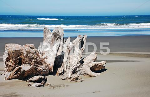 Stock photo of driftwood on beach