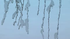 Hanging Weeping Crab Apple Branches in Snow Stock Footage