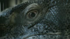 Monitor Lizard's Eye - stock footage