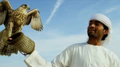 Trained Saker Falcon Balanced Falconers Glove - stock footage