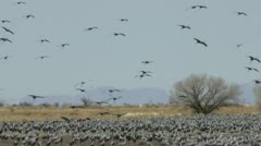 Birds Land On Marshy Grassland Stock Footage