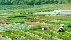 Two farmers in vegetable garden Stock Photos