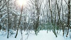 winter forest snowfall on a sunny day pan shot from left to right - stock footage