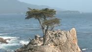 Stock Video Footage of Lone Cypress