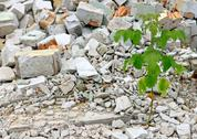 Stock Photo of Debris and young plant