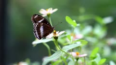 Butterfly Solo On Flower Stock Footage