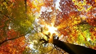 Stock Video Footage of autumn forest