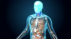 Medical Human - 360 Loop - Upper Body - stock footage