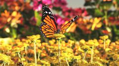 Nature butterfly Stock Illustration