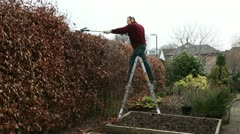 man on ladder trimming beech hedge with petrol hedge clippers - stock footage