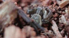 Spider lying in wait [Macro] Stock Footage