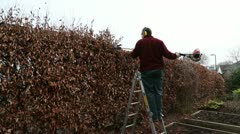 Man on ladder trimming beech hedge Stock Footage