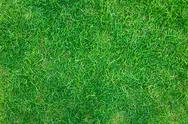 Close-up image of fresh spring green grass Stock Photos
