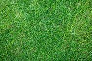 Close-up image of fresh spring green grass Stock Photos