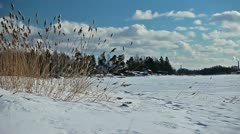 View of dried grass swaying in the wind on a frozen lake shore - stock footage