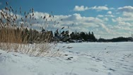 View of dried grass swaying in the wind on a frozen lake shore Stock Footage