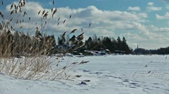 Grass swaying in the wind on a frozen lake shore in winter season - stock footage