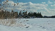 Grass swaying in the wind on a frozen lake shore in winter season Stock Footage