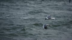 Seagull at stormy ocean 1 Stock Footage
