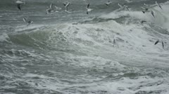 Seagulls at stormy coast 3 Stock Footage